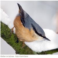 Der Kleiber als Motiv für die Stunde der Wintervögel