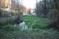 Der Teich am Schönberger Friedhof ist ein wichtiges Biotop für Amphibien wie Ringelnatter und Feuersalamander.