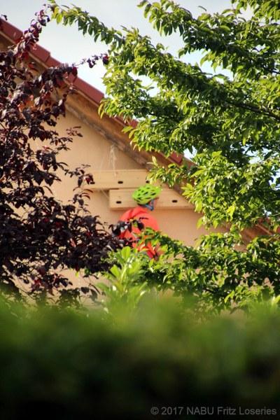 Ansicht 2. und 3. Mauerseglerkasten